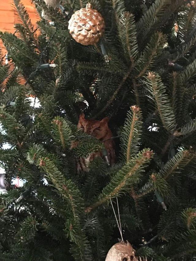 В США семья купила себе ёлку на Рождество с сюрпризом (8 фото)