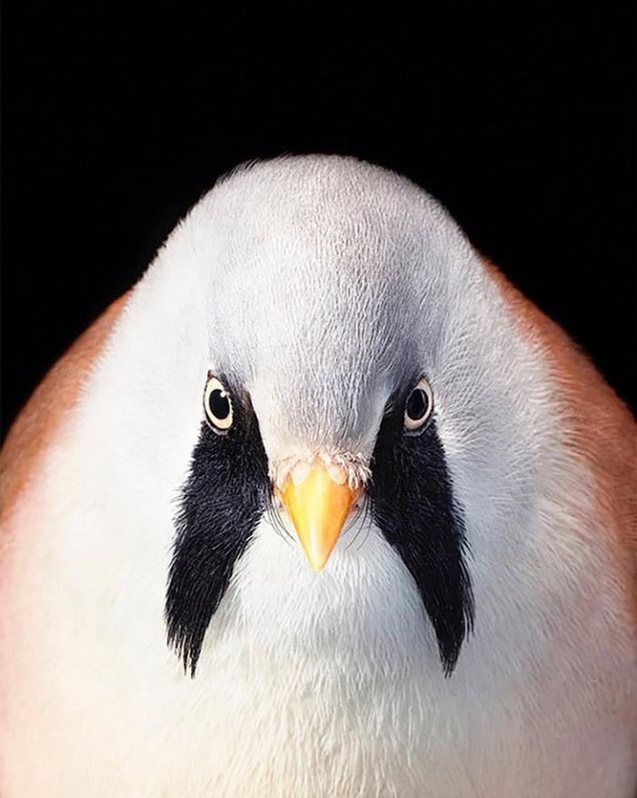 Портреты исчезающих птиц (11 фото)