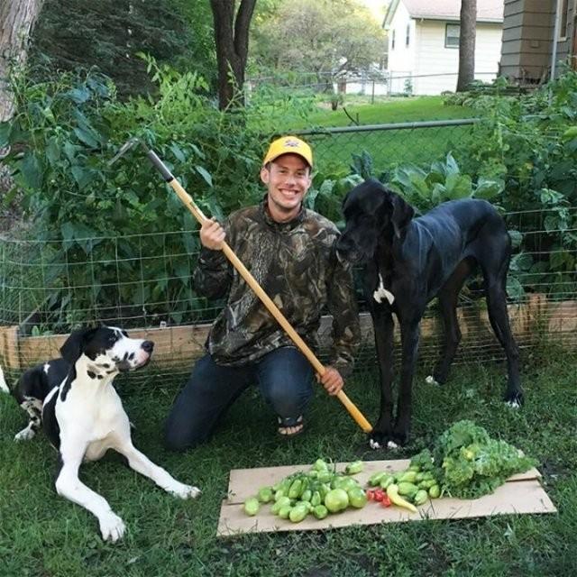 Пользователи показали, как выглядит вегетарианская охота (20 фото)