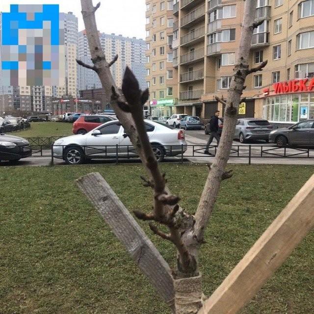 В Петербурге в середине января цветут цветы (6 фото)