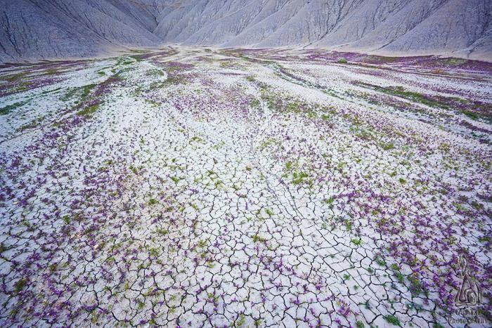 Очаровательная пустыня Анза-Боррего (17 фото)