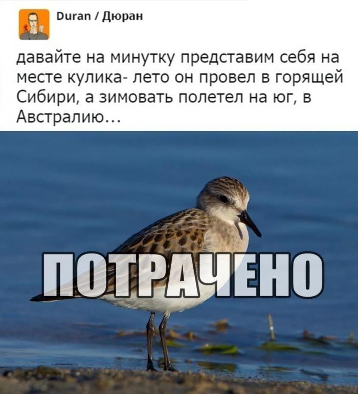 Подборка прикольных фото (65 фото) 14.01.2020