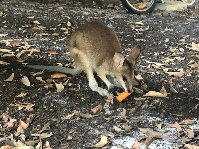 Морковный дождь в Австралии (7 фото)