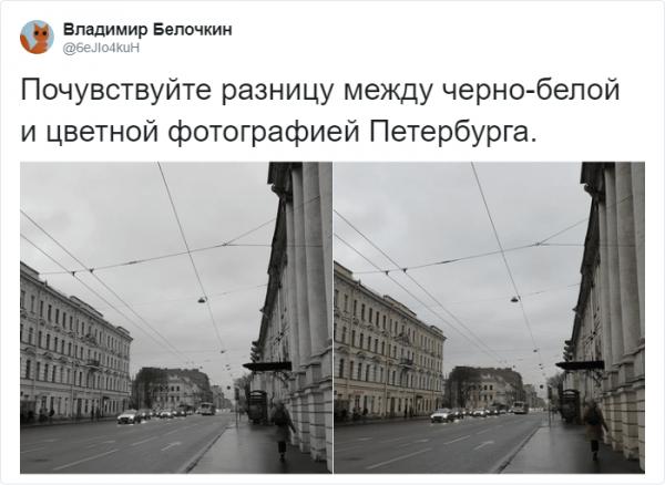 Пятьдесят оттенков серого: в Твиттере не могут найти разницу (16 фото)