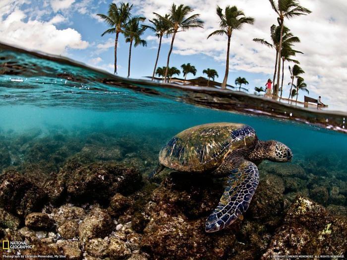 Поразительный подводный мир (24 фото)