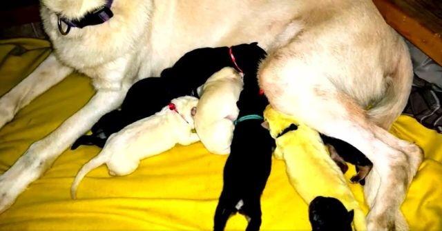 В Северной Каролине родился щенок с удивительной особенностью (5 фото)