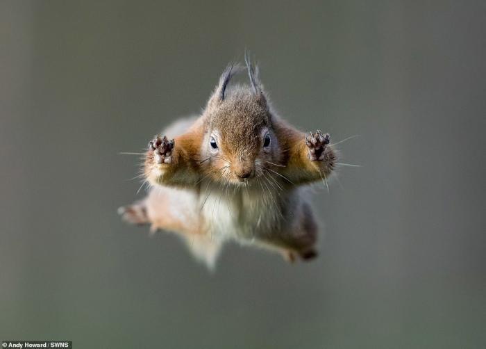 Летящие белки в фотографиях (6 фото)