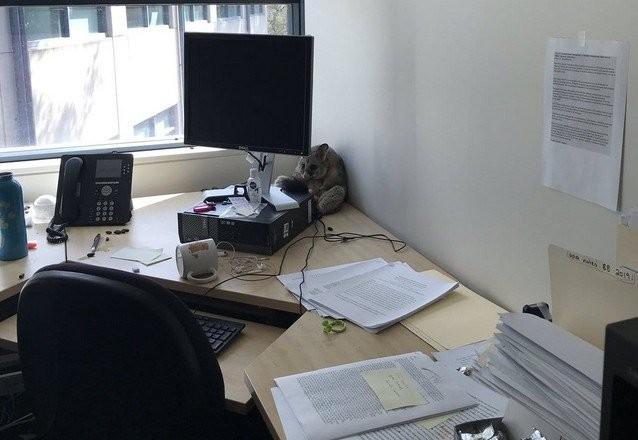 В офис австралийки забрался поссум, который позже стал мемом (17 фото)