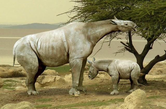Для чего жирафу длинная шея? (3 фото)