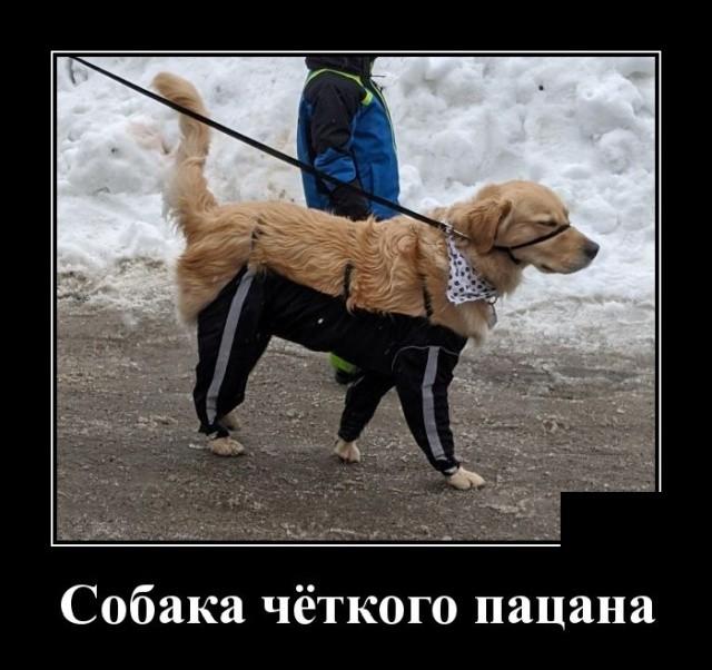 Демотиваторы (20 фото) 29.01.2020