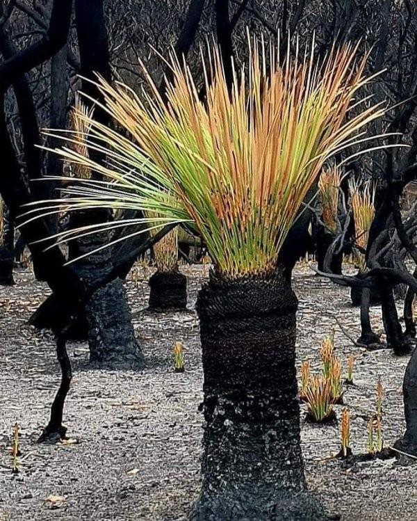 Природа Австралии начала восстанавливаться после пожаров (20 фото)