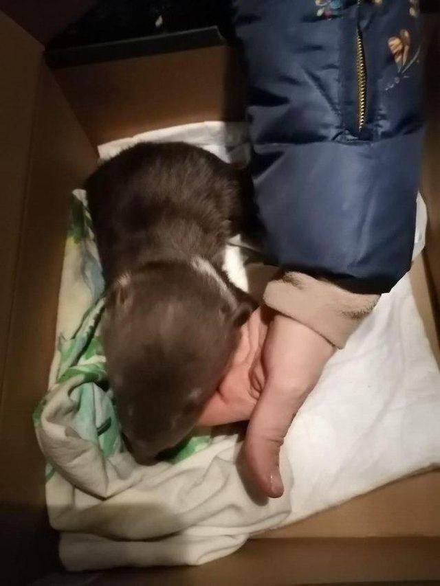 В Гатчинском районе собака нашла себе детеныша (5 фото)