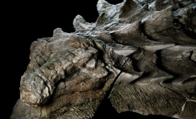 В скале нашли окаменелого динозавра (5 фото)