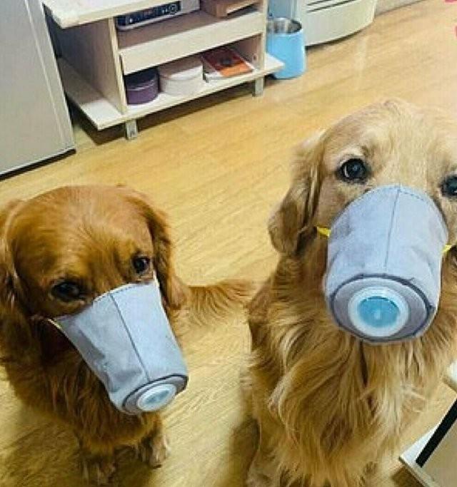 В Китае люди защищают своих питомцев от коронавируса (7 фото)