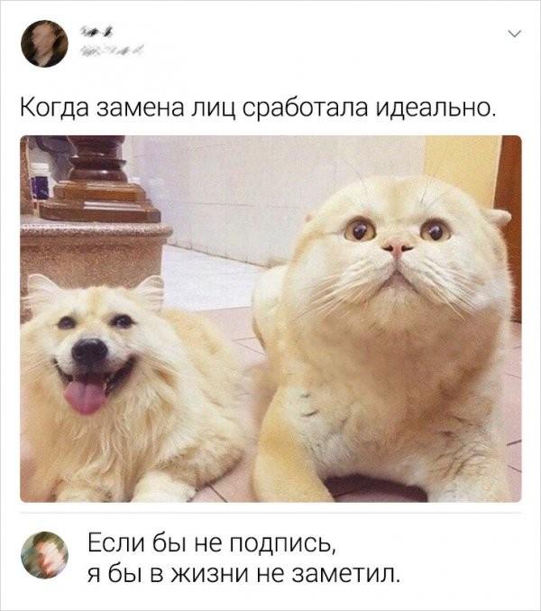 Подборка забавных комментов из соцсетей (20 фото)