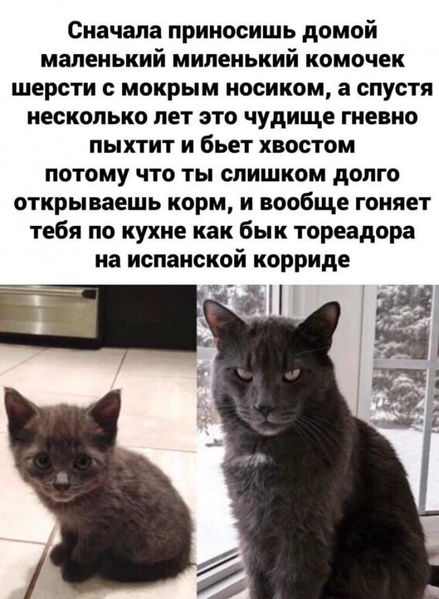 Подборка прикольных фото (67 фото) 03.02.2020