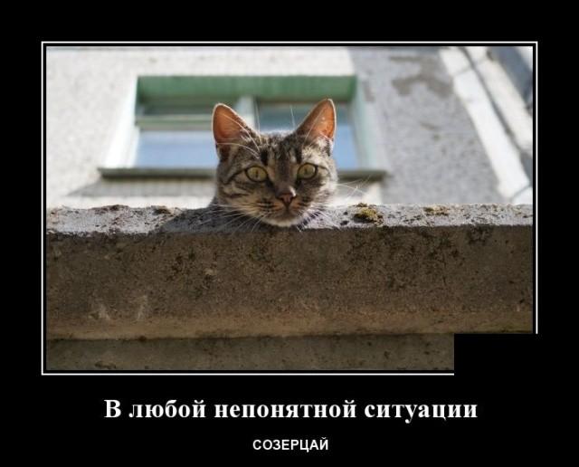 Демотиваторы (20 фото) 04.02.2020