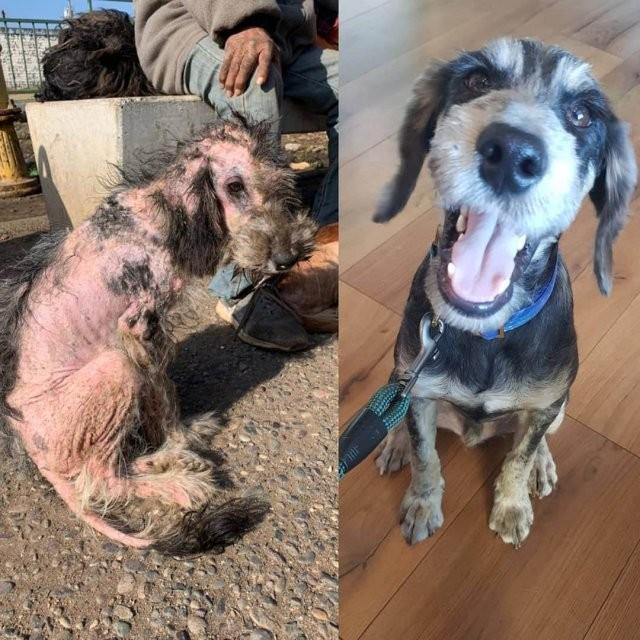 Чилиец выхаживает бездомных собак (15 фото)
