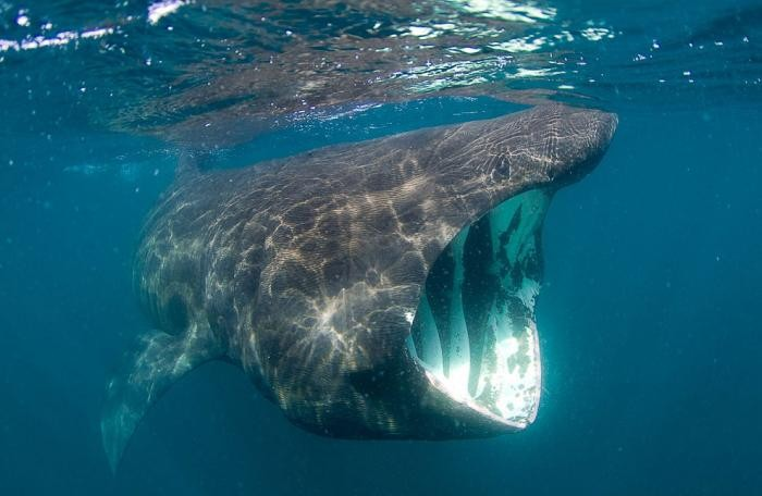 Грозные хищники морей и океанов (42 фото)