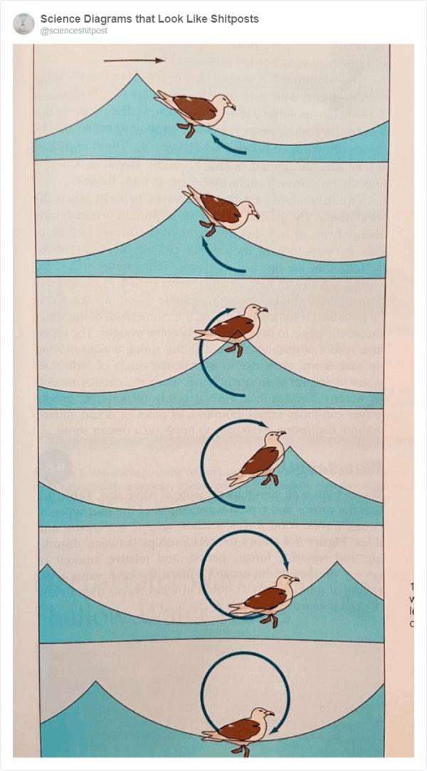 Безумные иллюстрации из школьных учебников (22 фото)