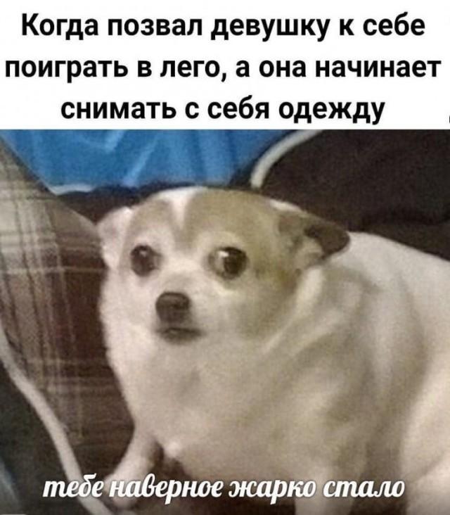 Подборка прикольных фото (64 фото) 05.02.2020