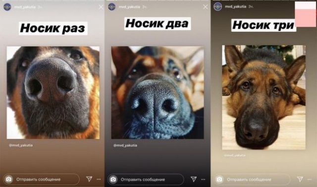 Собаки, котики: пресс служба МВД изменила подачу материала (7 фото)