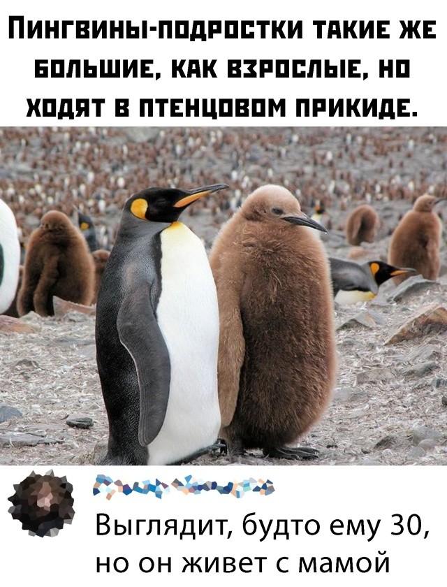 Подборка прикольных фото (66 фото) 07.02.2020