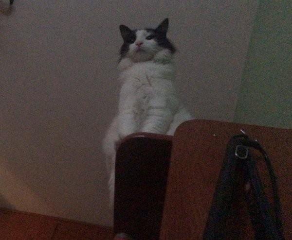 Безумные проделки от смекалистых котиков (17 фото)