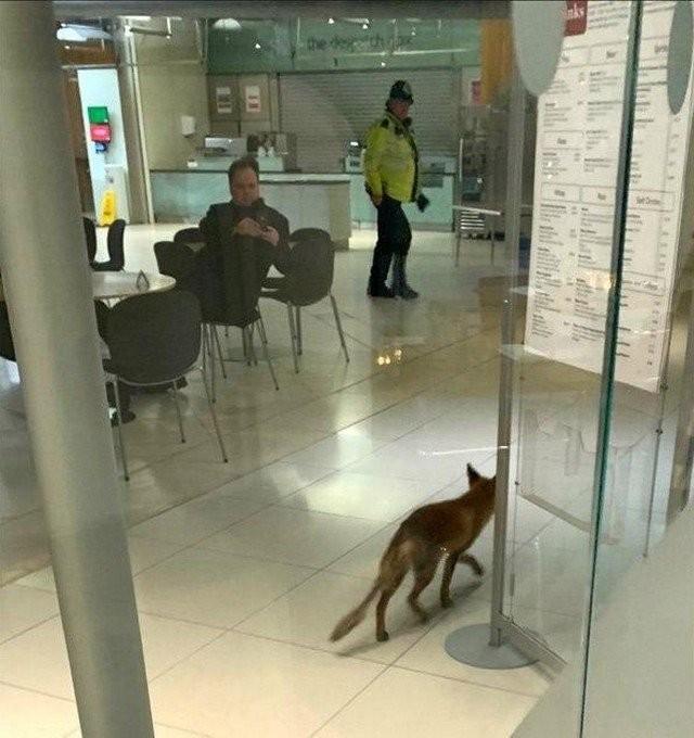 Необычный гость пришел в здание британского парламента (2 фото)