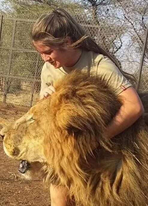 В ЮАР львы растерзали 21-летнюю девушку (5 фото)
