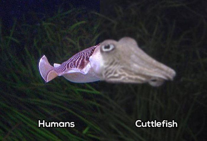 Сравнение зрения человека со зрением животных (10 фото)