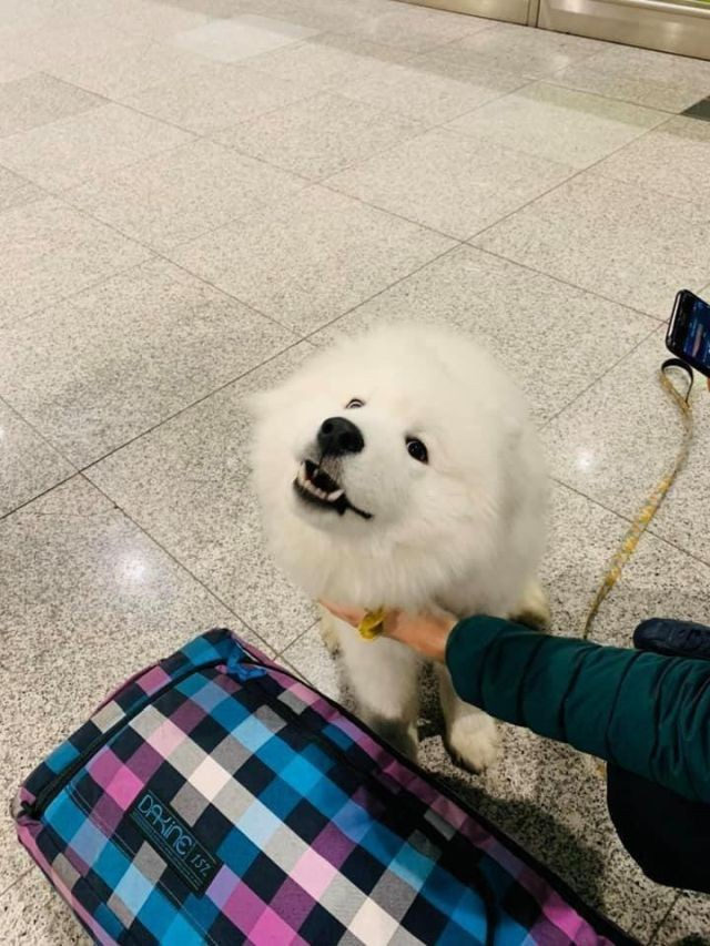 В аэропорту Сочи грузчики разбили переносную клетку с собакой (4 фото)