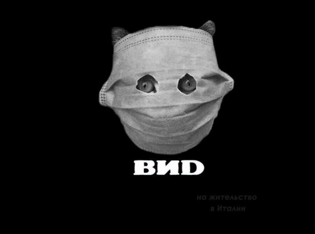 Кот, которого защитили от коронавируса маской, стал героем (16 фото)
