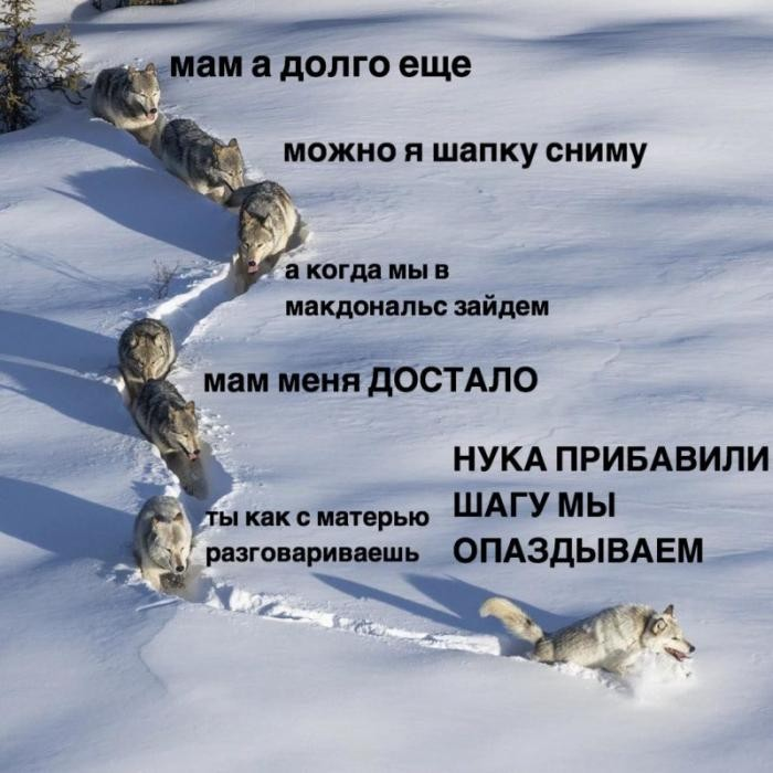 «Шерстяной волчара» из знаменитого мема оказался волчицей (10 фото)