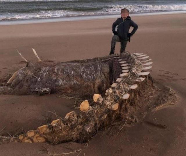 На берег Шотландии штормом вынесло скелет неизвестного существа (фото)