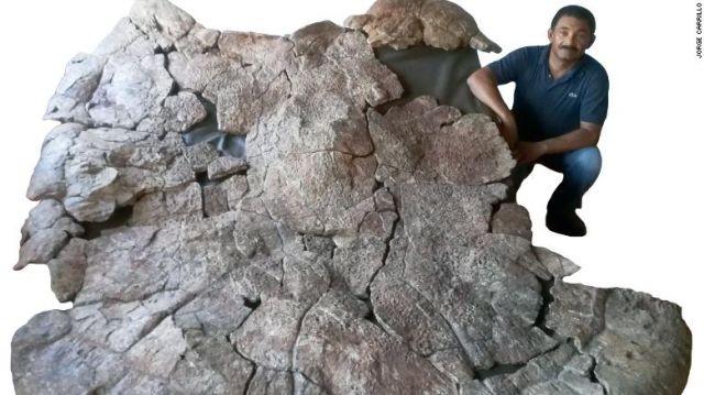 В Южной Америке нашли останки черепахи, которым 13 млн лет (5 фото)