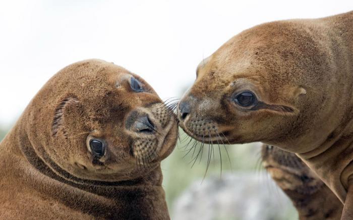 Влюбленные животные в фотографиях (23 фото)