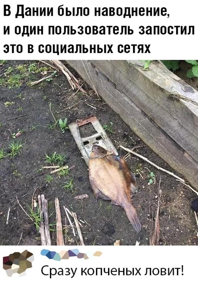 Подборка прикольных фото (60 фото) 21.02.2020