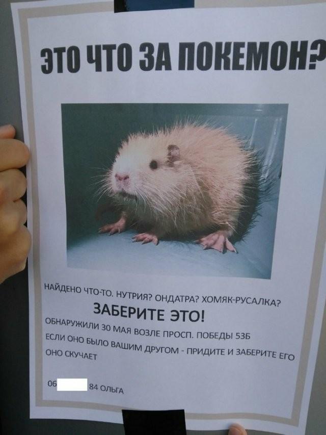 Смешные объявления о пропавших животных (13 фото)