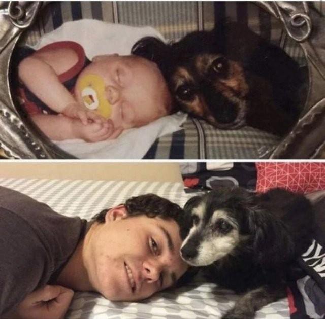 Собаки, которые поднимут вам настроение (21 фото)