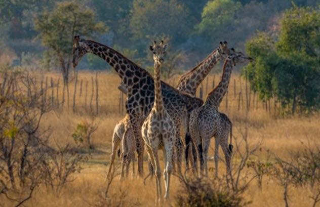 Заблуждения по поводу «самых опасных» туристических направлений (10 фо