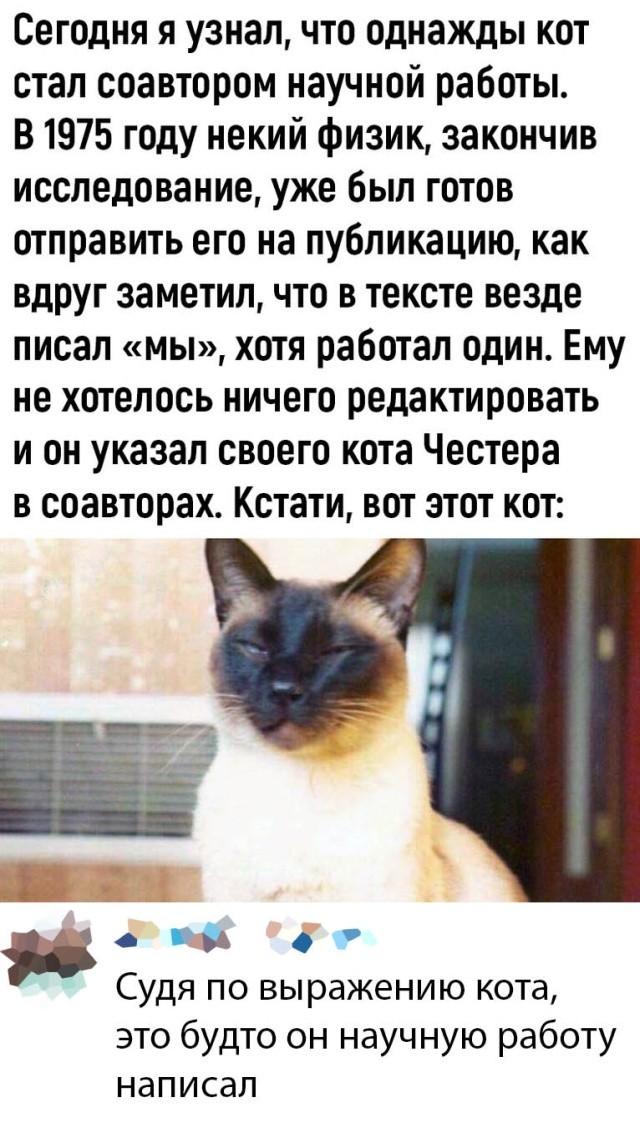 Подборка прикольных фото (63 фото) 02.03.2020