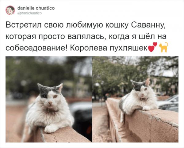 Рецензии на котов: забавный и странный тред в Твиттере (16 фото)