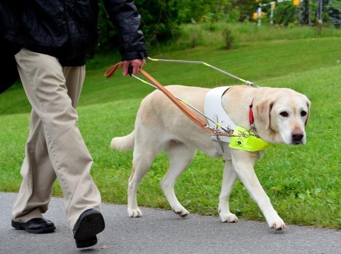 Животные, освоившие человеческие профессии (8 фото)