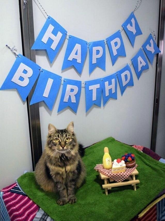 Сотрудники приюта устроили праздник одинокой кошке (9 фото)