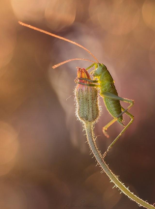Макрофотографии крошечных насекомых и животных (11 фото)