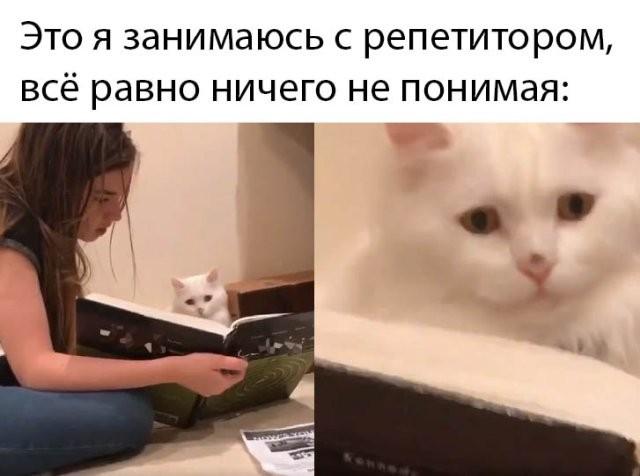 Подборка прикольных фото (64 фото) 10.03.2020