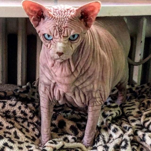 Кошку сравнивают с гусеницей, инопланетянином и мозгами (13 фото)