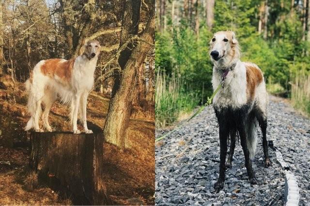 Никогда не отпускайте на прогулке собаку (15 фото)