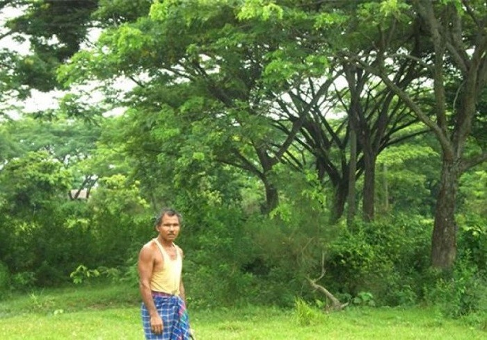 Люди, которые выращивают леса в одиночку (7 фото)